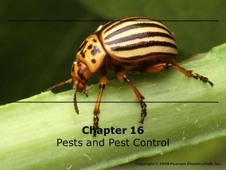 Chapter 16 Pests and Pest Control Copyright © 2008 Pearson Prentice Hall, Inc.