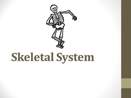 Skeletal System. Functions of the skeletal system Protection Support Movement Storage and Production of Materials.