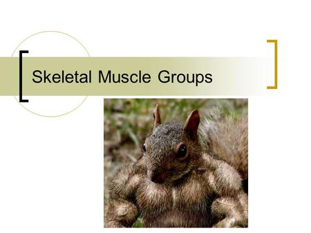 Skeletal Muscle Groups. Muscles of the head and neck Frontal – raises eyebrows Orbicularis oculi – closes eye Orbicularis oris – puckering Zygomaticus.