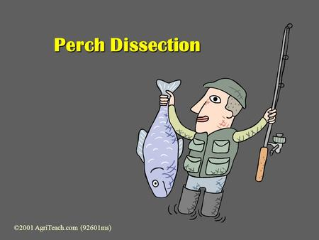 Perch Dissection ©2001 AgriTeach.com (92601ms) Preparation & Examination  Locate major external anatomical parts:  Dorsal Fin  Posterior Dorsal 