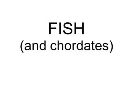 FISH (and chordates). What is a chordate? Members of the ANIMAL KINGDOM and the PHYLUM CHORDATA They have a dorsal, hollow nerve cord and a notocord.