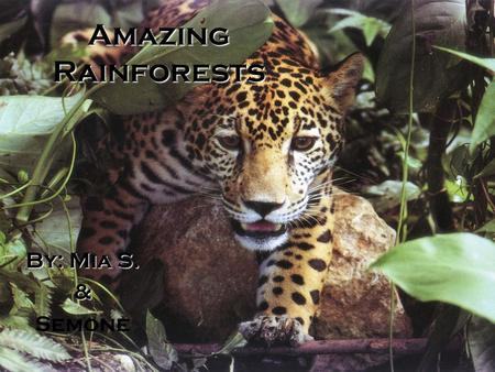 Amazing Rainforests By: Mia S. & Semone. ? What is a rainforest? A rainforest is a steamy place that has four different layers. These layers are called.