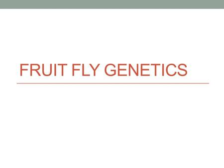 FRUIT FLY GENETICS. DO NOW TUESDAY Let's see what you remember. Give the genetics term that describes each of the following: a) AA b) Aa c) Aa d) Red.