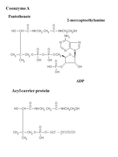Coenzyme A 2-mercaptoethylamine ADP Pantothenate ser - protein Acyl carrier protein.