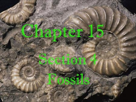 Chapter 15 Section 4 Fossils. Fossil Preservation Five main ways fossils are preserved: o Rocks o Amber o Petrifaction o Asphalt o Ice.
