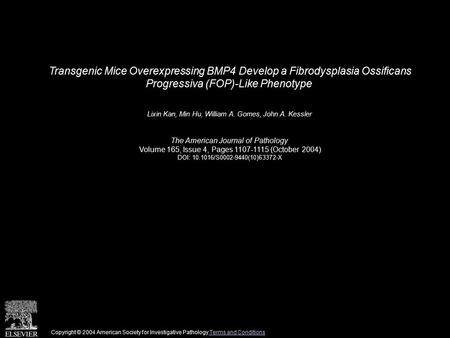 Transgenic Mice Overexpressing BMP4 Develop a Fibrodysplasia Ossificans Progressiva (FOP)-Like Phenotype Lixin Kan, Min Hu, William A. Gomes, John A. Kessler.
