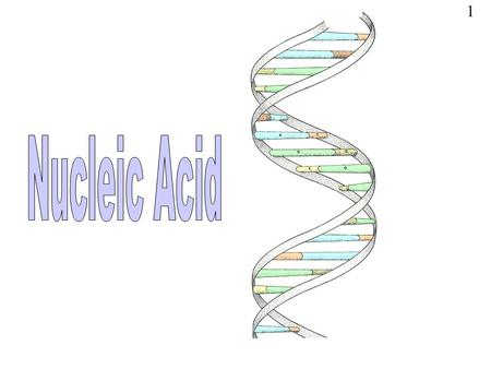 1. NUCLEIC ACIDS: Are biological molecules essential for known forms of life on earth They include DNA and RNA Discovered by Friedrich Miescher in 1869.