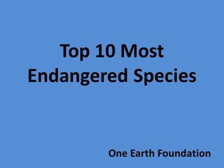 Top 10 Most Endangered Species One Earth Foundation.