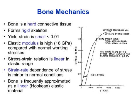 Bone Mechanics Bone is a hard connective tissue Forms rigid skeleton Yield strain is small < 0.01 Elastic modulus is high (18 GPa) compared with normal.