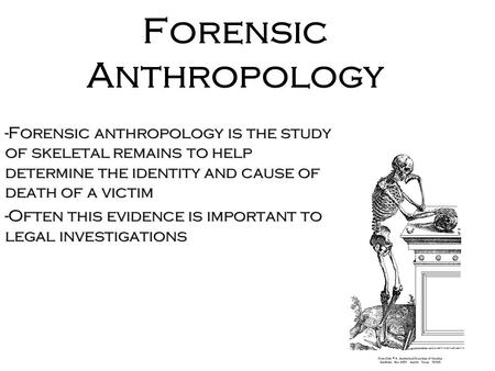 Forensic Anthropology -Forensic anthropology is the study of skeletal remains to help determine the identity and cause of death of a victim -Often this.