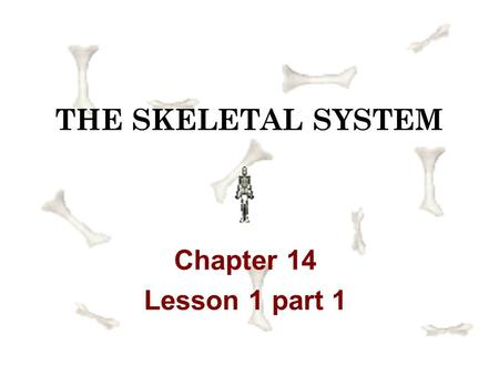 THE SKELETAL SYSTEM Chapter 14 Lesson 1 part 1.