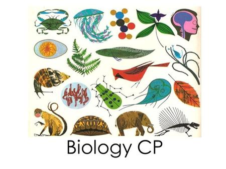 Biology CP. Homework Ch.14.1 Section Review p.258 #1-4 9-3-15 Food Chain and Food Web Quiz 9-4-15.