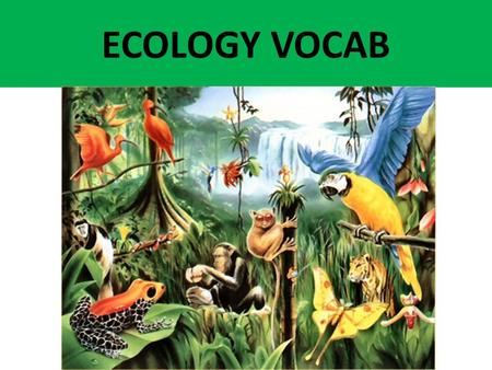 ECOLOGY VOCAB. all the food chains that exist in a community. Food web.