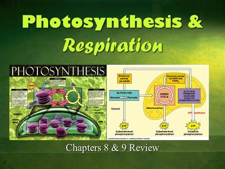 Photosynthesis & Respiration Photosynthesis & Respiration Chapters 8 & 9 Review.