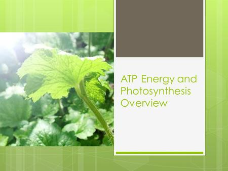 ATP Energy and Photosynthesis Overview. Energy and Life  All cells need ENERGY for life.  Some things we use energy for are:  Moving  Thinking  Sleeping.