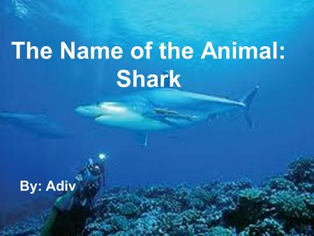 The Name of the Animal: Shark By: Adiv. 1.The shark doesn't sleep all day or night. 2.The shark is fast, he swims 8 kilometers an hour. 3.The color of.