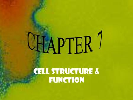 CHAPTER 7 CELL STRUCTURE & FUNCTION PGS. 168 - 199 CELL STRUCTURE & FUNCTION.