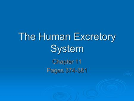 The Human Excretory System Chapter 11 Pages 374-381.