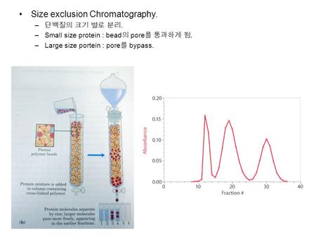 Size exclusion Chromatography. – 단백질의 크기 별로 분리. –Small size protein : bead 의 pore 를 통과하게 됨. –Large size portein : pore 를 bypass.