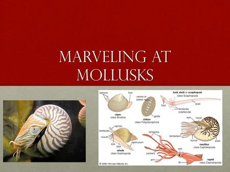 Marveling at Mollusks. Linnaen System of Classification.