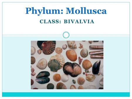 CLASS: BIVALVIA Phylum: Mollusca. Characteristics of Mollusks Commonly called shellfish Over 100,000 species Most are soft-bodied and have shells Most.