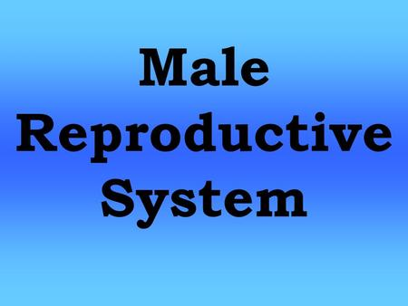 Male Reproductive System. Function Function: - Procreation (Babies) Male Reproductive System.