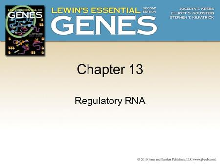Chapter 13 Regulatory RNA. 13.1 Introduction  RNA functions as a regulator by forming a region of secondary structure (either inter- or intramolecular)