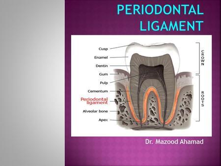 Periodontal ligament Dr. Mazood Ahamad.