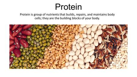 Protein Protein is group of nutrients that builds, repairs, and maintains body cells; they are the building blocks of your body.