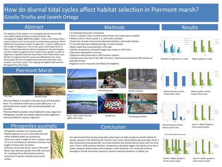 How do diurnal tidal cycles affect habitat selection in Piermont marsh? Giselle Triviño and Janeth Ortega Piermont Marsh Abstract MethodsResults Number.