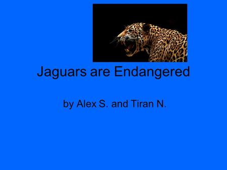 Jaguars are Endangered by Alex S. and Tiran N.. Where Do I live? I live in A house.