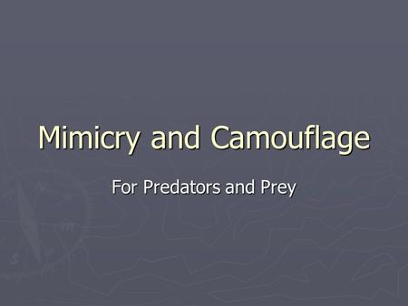 Mimicry and Camouflage For Predators and Prey. Mimicry and Camouflage ► Mimicry is when 2 or more animal species look alike; ► camouflage refers to an.