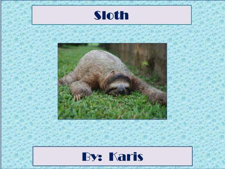 Sloth By: Karis Animal Facts Description A sloth's colors are grey, brown and slightly green because it is algae growing on its back. A sloth's height.