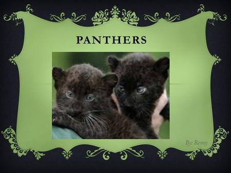 PANTHERS By: Renay. INTRODUCTION  Also commonly known as the Black Panther  The Panther is the general name used to refer to any black colored feline.