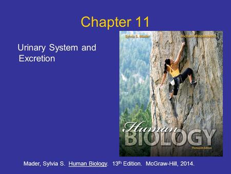 Chapter 11 Urinary System and Excretion Mader, Sylvia S. Human Biology. 13 th Edition. McGraw-Hill, 2014.