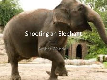 Shooting an Elephant Amber Waddell. George Orwell 1903-1950 He sympathized with the underdog and spoke out against social and political injustice Born.
