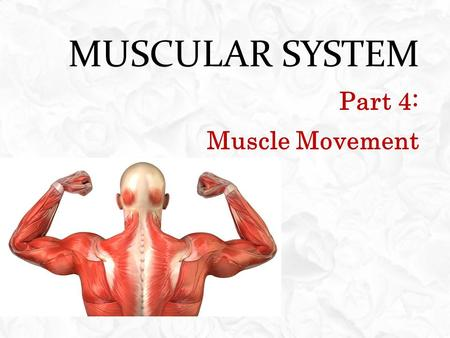 MUSCULAR SYSTEM Part 4: Muscle Movement. OBJECTIVES  Explain how the attachments, locations and interactions of skeletal muscles make possible certain.