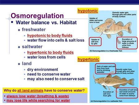 AP Biology Osmoregulation Why do all land animals have to conserve water?  always lose water (breathing & waste)  may lose life while searching for.