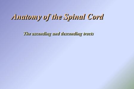 Anatomy of the Spinal Cord The ascending and descending tracts Anatomy of the Spinal Cord The ascending and descending tracts.