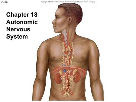Co 18 Chapter 18 Autonomic Nervous System. Fig. 18.1 (a) Somatic Nervous System Posterior root ganglion Somatic sensory neuron detects stimuli and transmits.