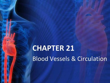 CHAPTER 21 Blood Vessels & Circulation. 21.1: Blood Vessels Vessel types from heart & back Structure of Vessel Walls Tunica intima tunica media tunica.