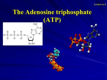 The Adenosine triphosphate (ATP) Lecture no 6. The Adenosine triphosphate (ATP) The Adenosine triphosphate (ATP) Adenosine-5'-triphosphate (ATP) is a.