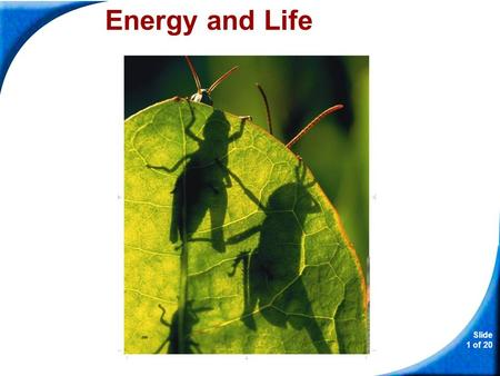 Slide 1 of 20 Copyright Pearson Prentice Hall Energy and Life.