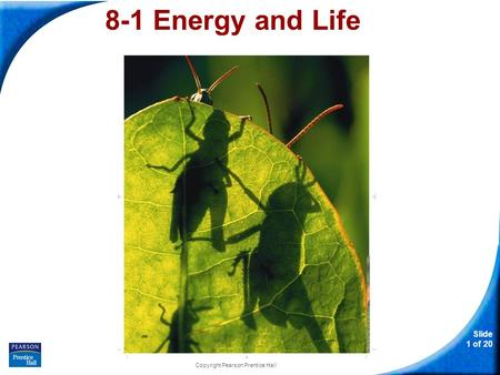 Slide 1 of 20 Copyright Pearson Prentice Hall 8-1 Energy and Life.