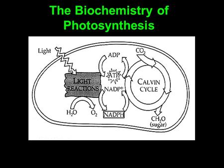 The Biochemistry of Photosynthesis. Adenosine triphosphate Adenosine triphosphate, or ATP, is an important molecule found in all living cells. It readily.