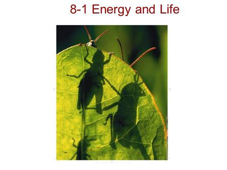 Copyright Pearson Prentice Hall 8-1 Energy and Life.