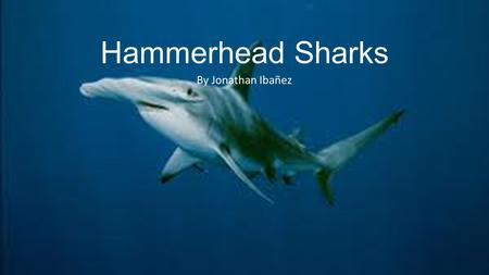 Hammerhead Sharks By Jonathan Ibañez. Hammerhead Shark Species and Their Lengths Great Hammerhead- This species is the biggest of all Hammerheads and.
