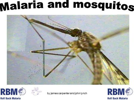 By james carpenter and john lynch. Malaria is a life-threatening parasitic disease transmitted by mosquitoes. It was once thought that the disease came.