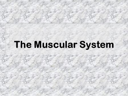 The Muscular System. Did you know that ? - more than 50% of body weight is muscle !