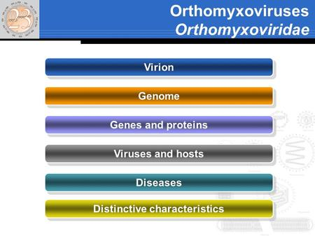 Orthomyxoviruses Orthomyxoviridae Virion Genome Genes and proteins Viruses and hosts Diseases Distinctive characteristics.